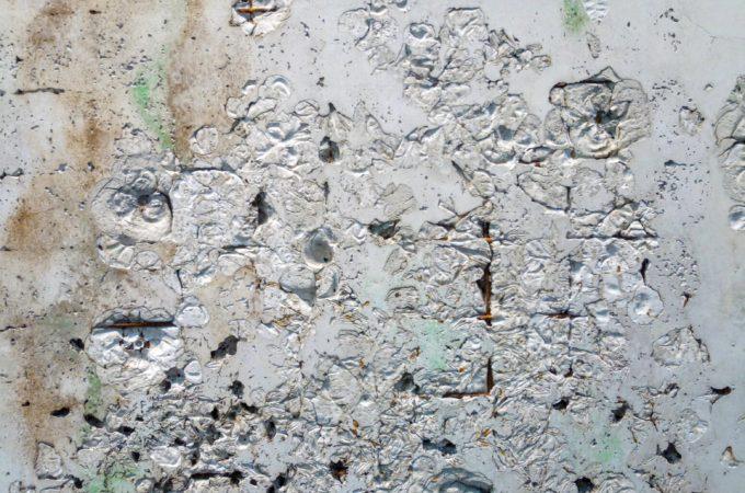 fiori-nel-cemento