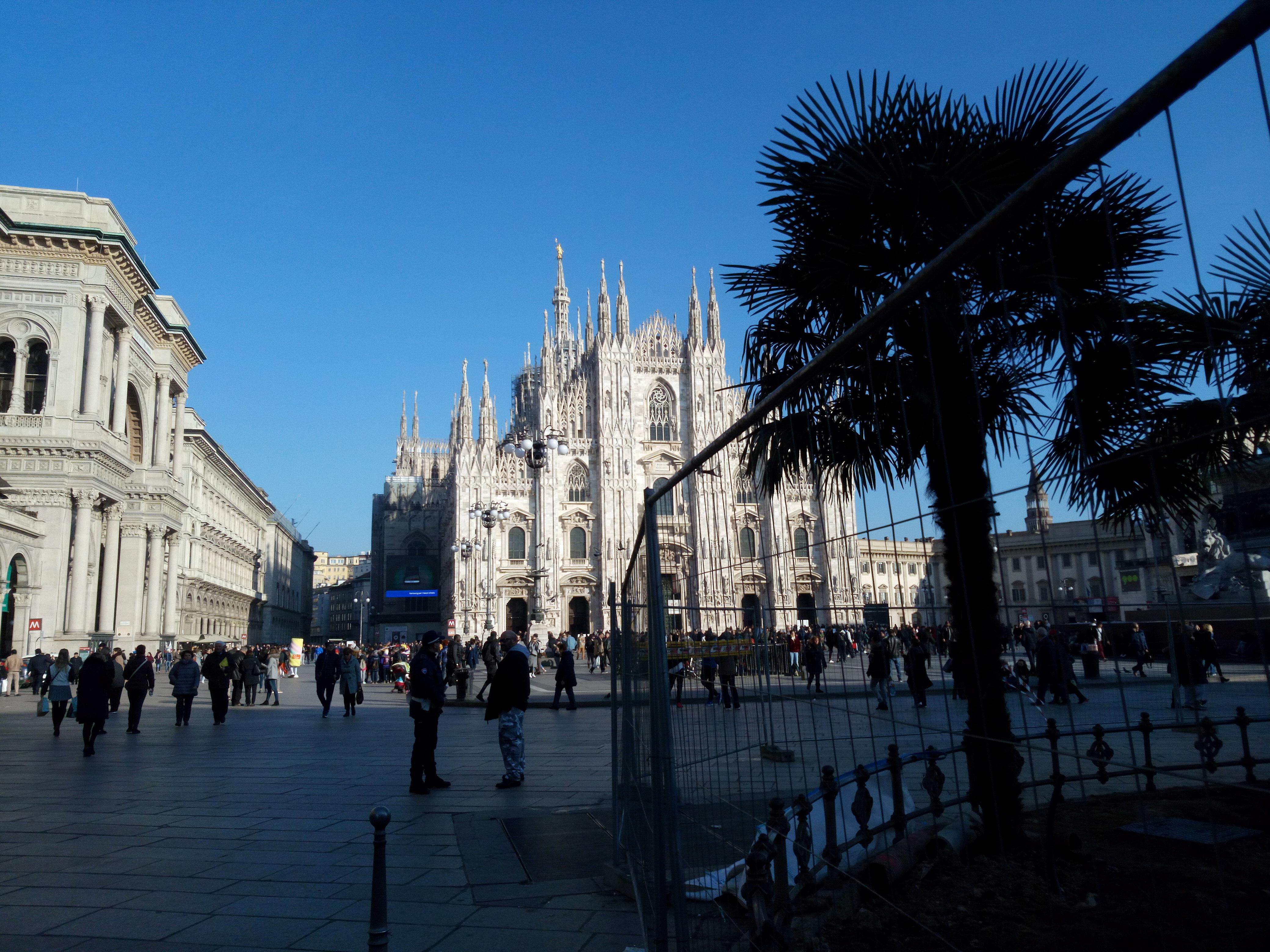 Palme in Piazza Duomo, Milano, Italia